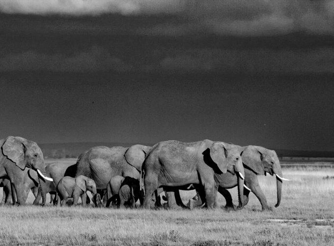Wildlife Photographic Safaris